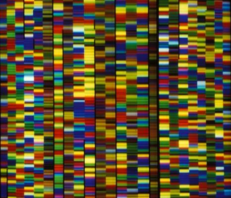 inserm-ADN-cp-roest-crollius-