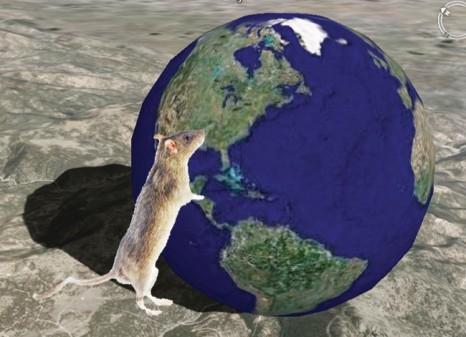 cp_cerveau140411 rat terre