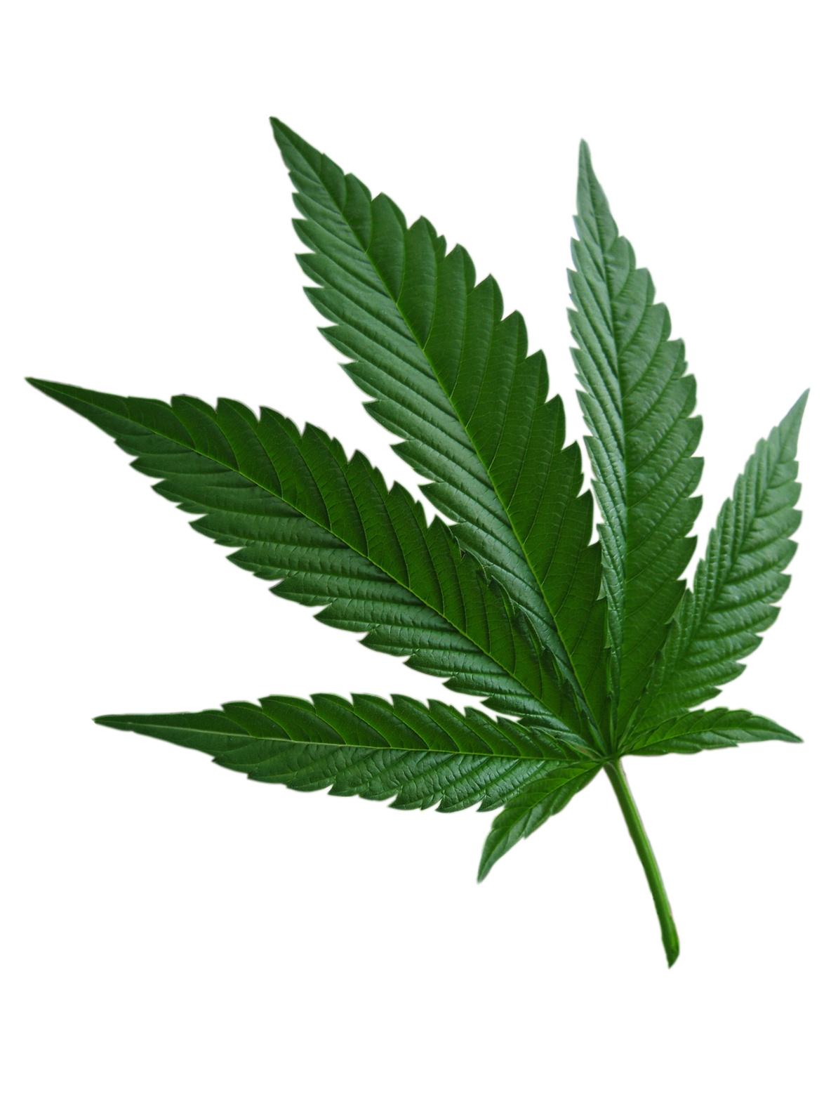 comment agit le cannabis sur la m u00e9moire de travail