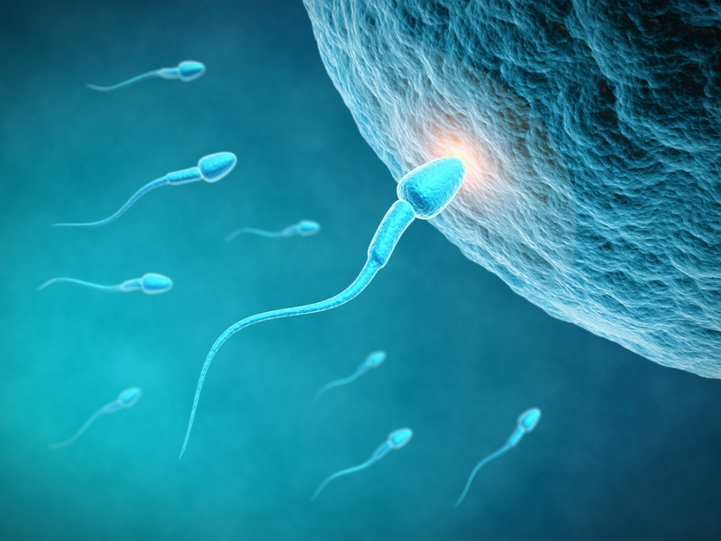 Losing sperm cells |  Press room |  Inserm