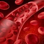 Vaisseaux sanguins et globules rouges