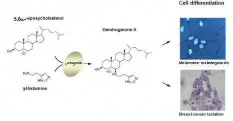 Dendrogine_ENG