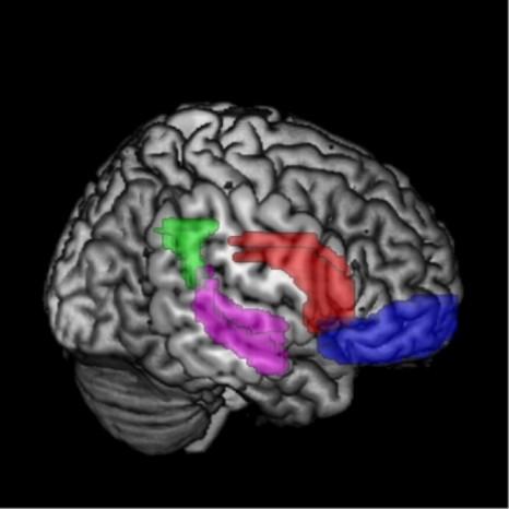 Système cérébral d'évaluation
