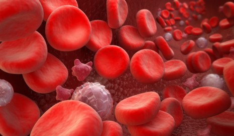Blood Cells : erythrocyte, thrombocyte, leukocyte