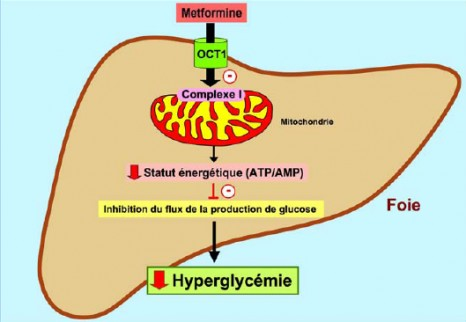 cp-metformine