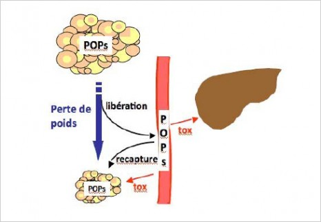 cp-polluants-151210