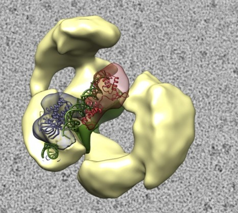 cp_transcription_TFIID 3d