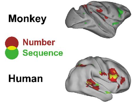 Une avancée dans la compréhension des origines du langage