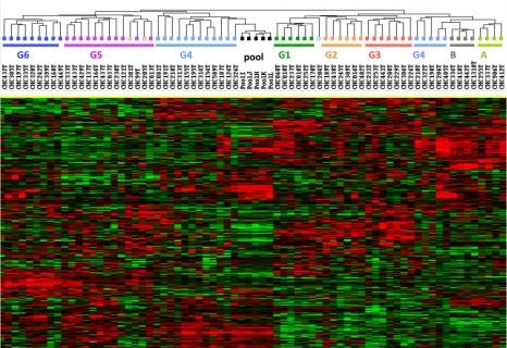 Expression de gènes