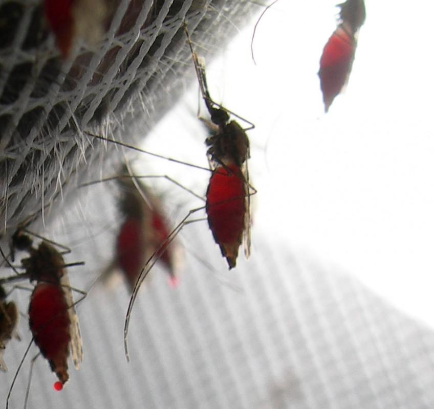 Etude du paludisme