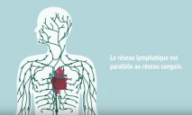 <p>Heart failure affects over one million people in France. Although the blood system is the first to have been explored for the purpose of improving heart function, a study by Inserm has revealed the potential of a secondary system that had previously received scant attention. The researchers analysed the heart lymphatic system in an animal model.</p>