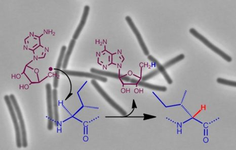 cp-enzymebact_synthantib
