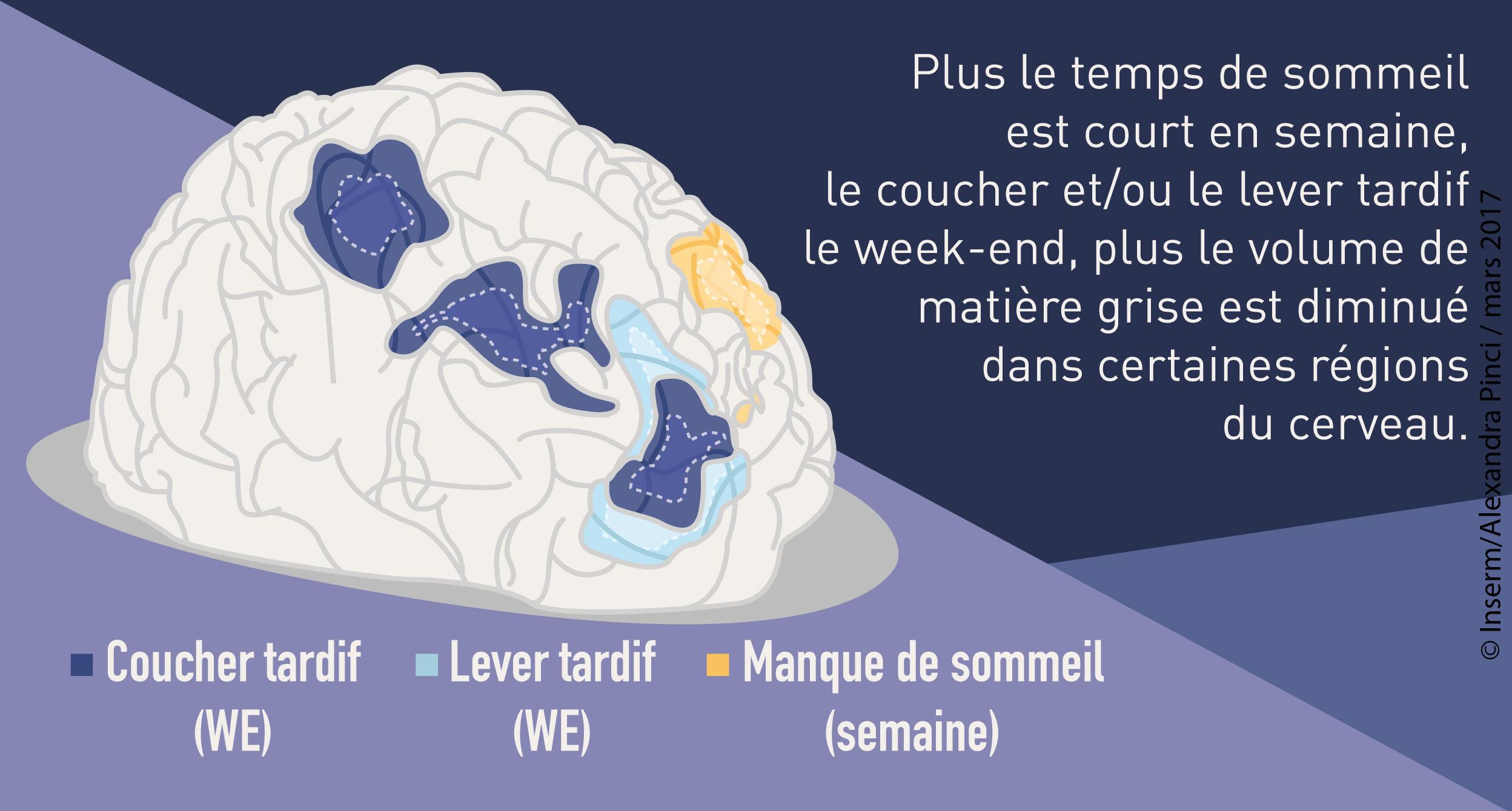 ilustration-sommeil-cerveau-copyright