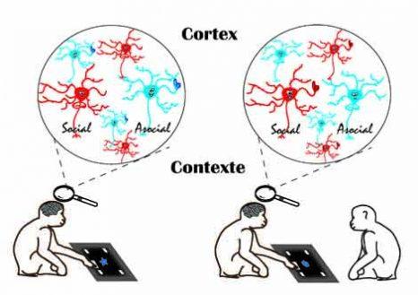 neurones_sociaux_web