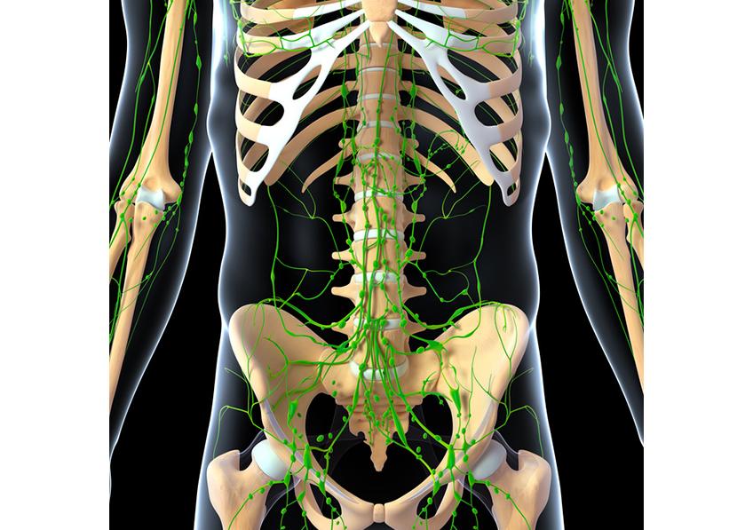 Anatomie 3d du système lymphatique © Fotalia